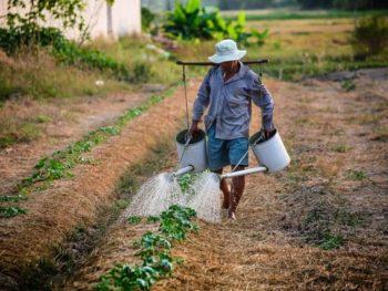 Fertilizers and Pesticides